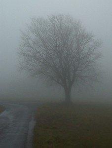 brouillard1-227x300 dans Billevesees & coquecigrues