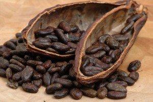 cacao chocolat1